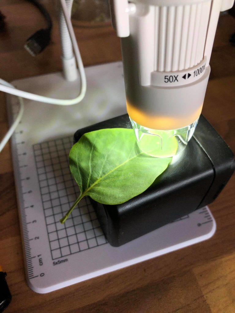 USB-Mikroskopieren mit Kindern, als Beispiel ein Blatt